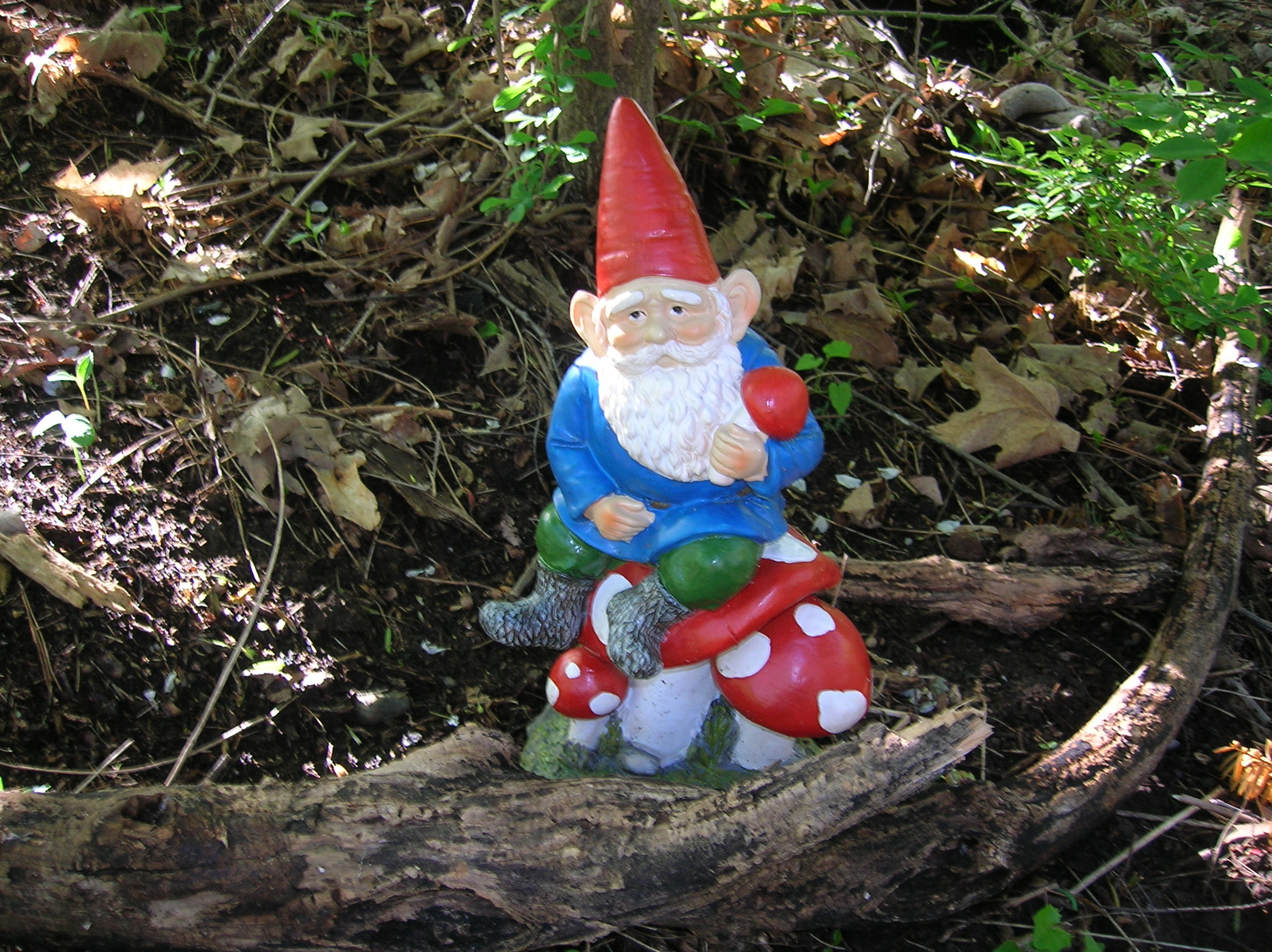 Gnome In Garden: The Home Tome