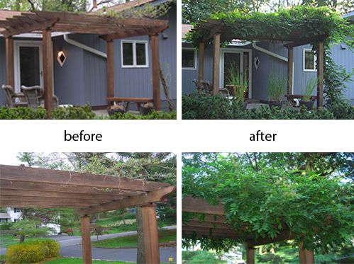 Before And After Pergola