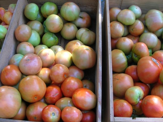 Nyack tomatoes