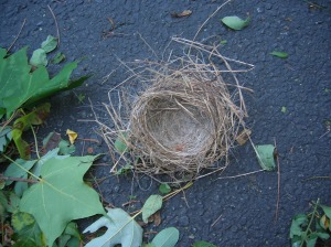 nest after hurricane