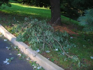 branches in Nyack after hurricane