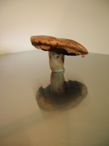 mushroom on table