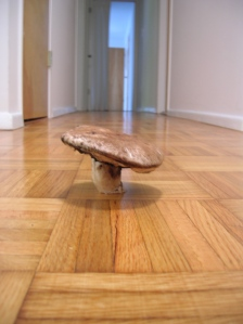 mushroom in hall