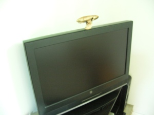 mushroom on TV