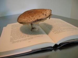 mushroom on book