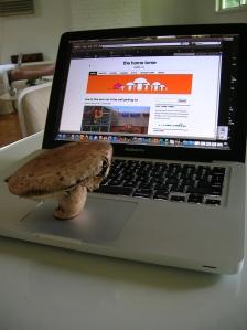 mushroom on computer