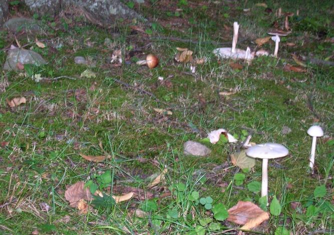 mushroom city decimated