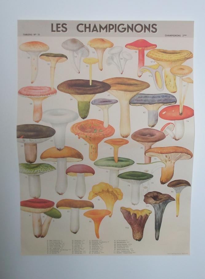 champignons poster