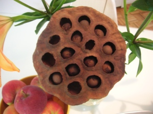 dried lotus pod