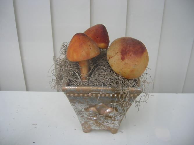 mushrooms in window
