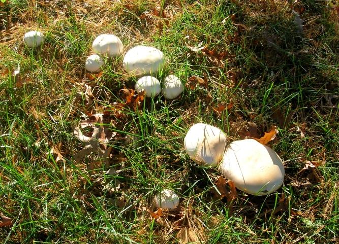 mushrooms outside supermarket