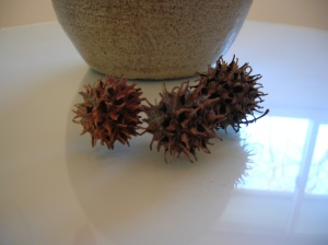 sweet gum seed pods