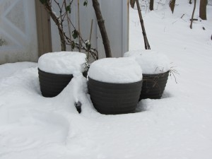 snow cupcakes herb garden