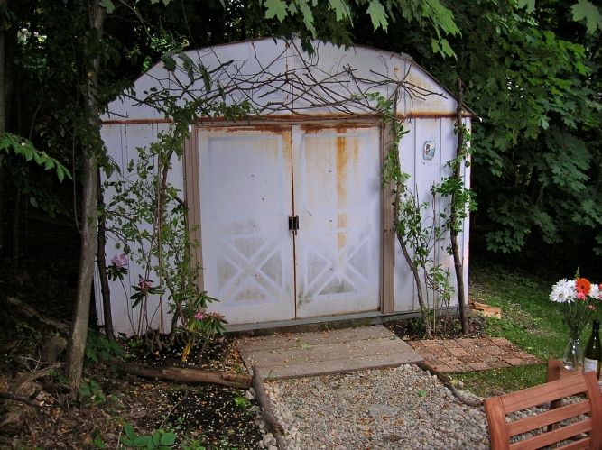 shed with akebia vines