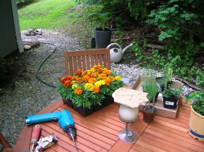 attempt at gardening