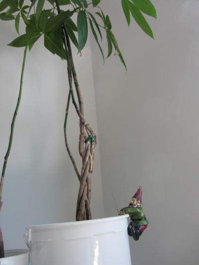 gnome plant climber