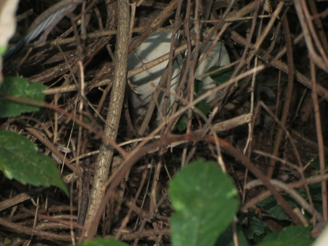 round mushroom hiding