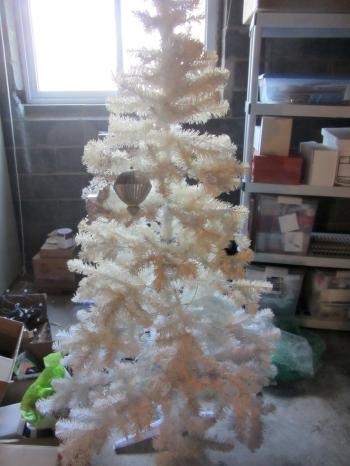 tree in basement
