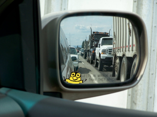 Summer Traffic Goldbug